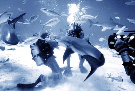ou, dans le monde, nager avec les requins