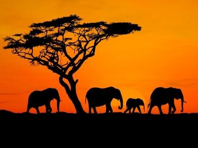 comment faire un safari en afrique