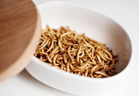 restaurant d'insectes
